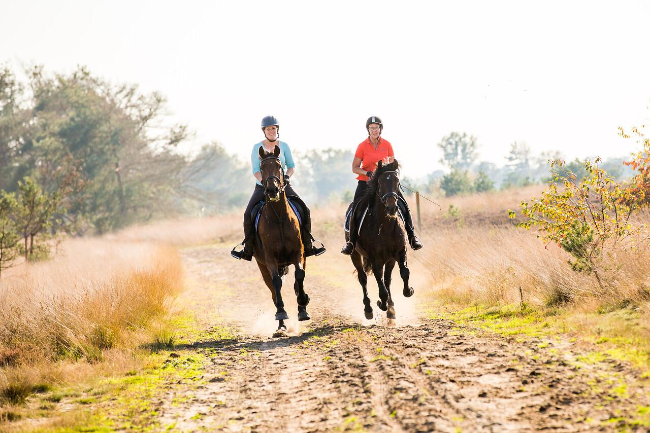 Paardrijden-Brabant